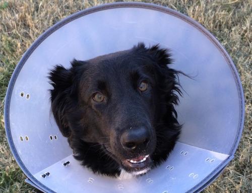 Dog First Aid Basics