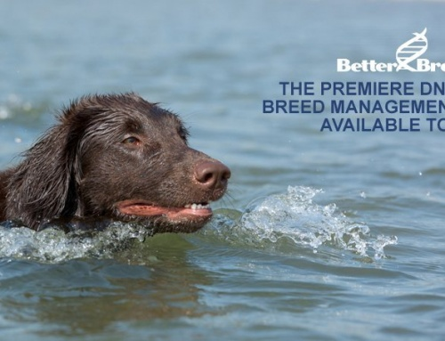 FCRSA Endorses BetterBred